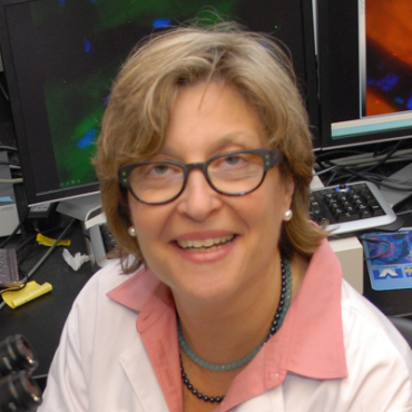 Professor Randi Silver is a senior author of an article in the Proceedings of the National Academy of Sciences